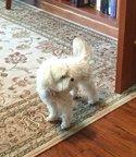 prince the dog